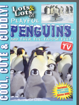 LOTS & LOTS OF PLAYFUL PENGUINS