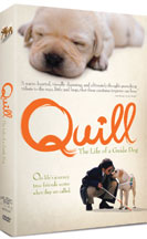 QUILL: THE LIFE OF A GUIDE DOG cover image