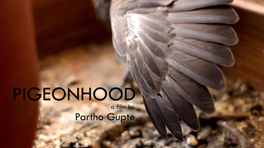 PIGEONHOOD cover image