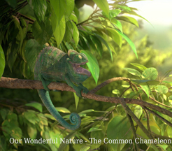 OUR WONDERFUL NATURE - THE COMMON CHAMELEON cover image