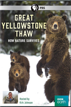 GREAT YELLOWSTONE THAW: HOW NATURE SURVIVES cover image