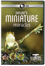 NATURE: NATURE'S MINIATURE MIRACLES